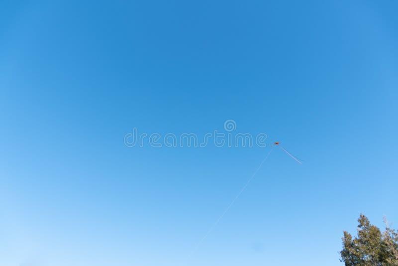 与天空蔚蓝的风筝飞行在背景和树 图库摄影