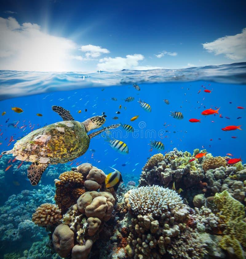 与天际的水下的珊瑚礁和水浮出水面 免版税图库摄影