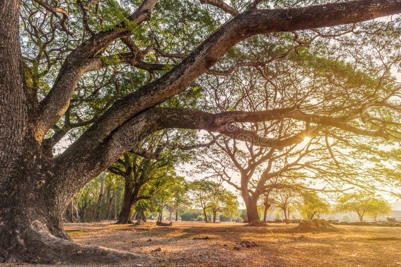 与太阳光的森林大树在公园 免版税库存照片