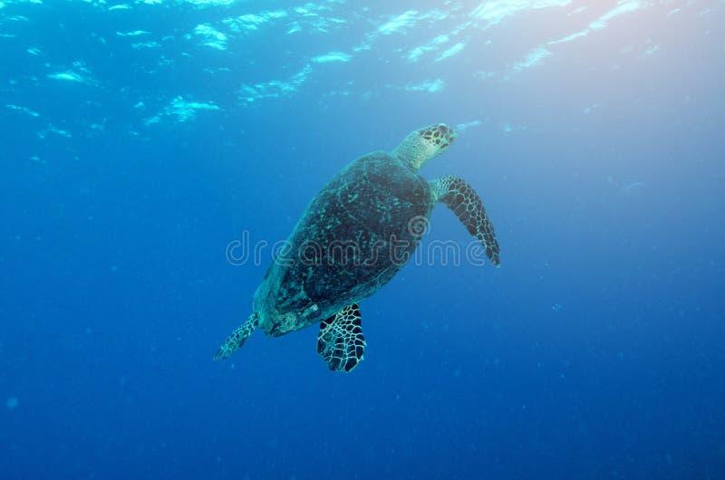 与太阳光的海洋水下的礁石通过水的表面 免版税库存照片