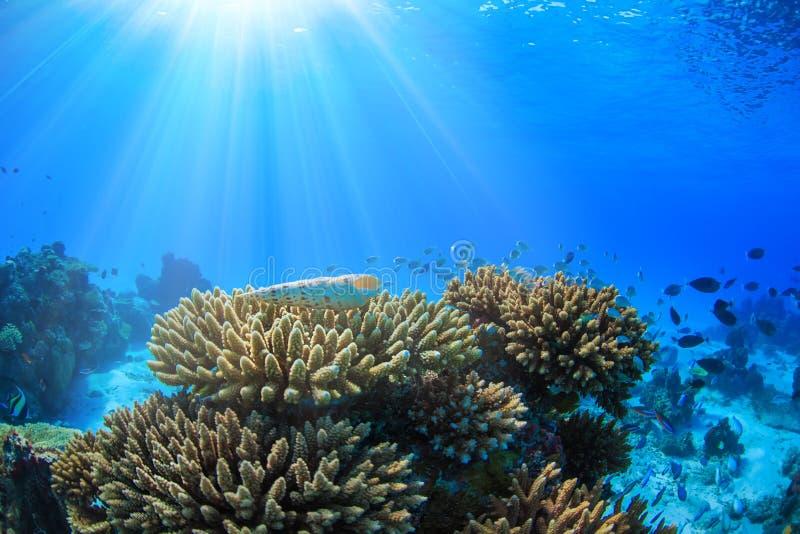 与太阳光的海洋水下的礁石通过水表面 免版税图库摄影