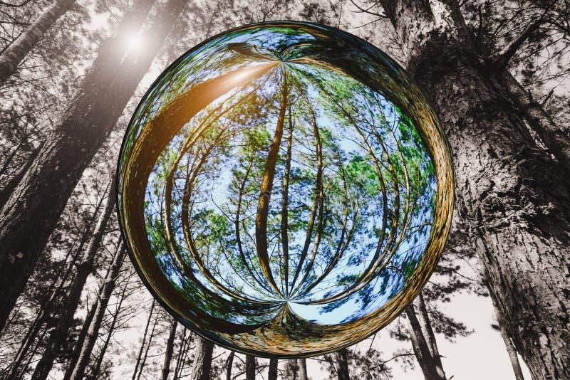 与太阳光的高大的树木在玻璃球作用的森林里有黑白图象样式背景 免版税图库摄影