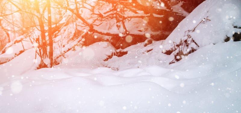 与太阳射线的冬天背景 免版税库存图片