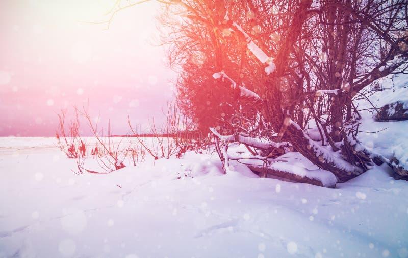 与太阳射线的冬天背景 免版税图库摄影