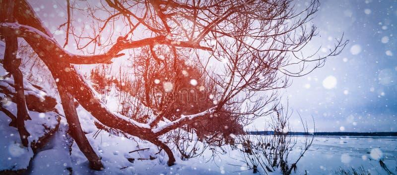 与太阳射线的冬天背景 库存照片