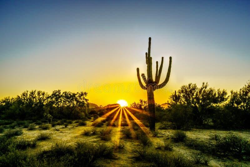 与太阳的日出通过灌木发出光线发光在亚利桑那沙漠 免版税库存照片
