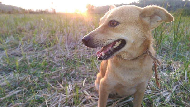 与太阳集合的狗 库存图片
