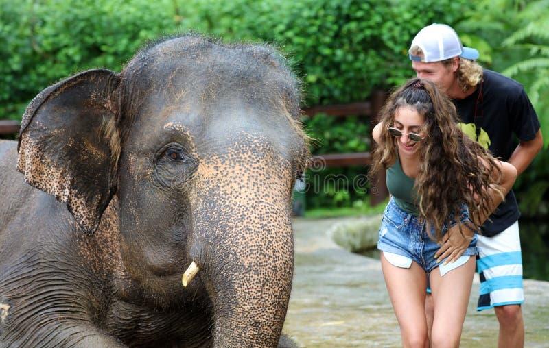 与夫妇的美丽的独特的大象在大象保护保留在巴厘岛印度尼西亚 免版税库存图片