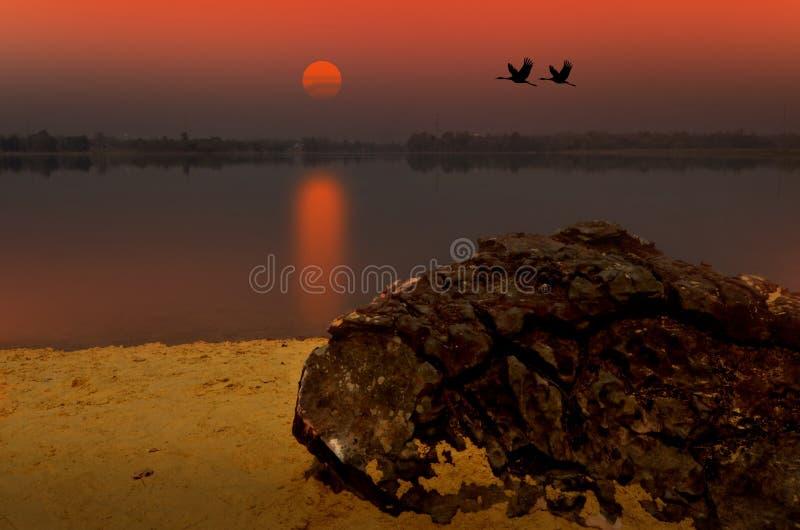 与夫妇起重机的日落在湖在晚上 免版税图库摄影
