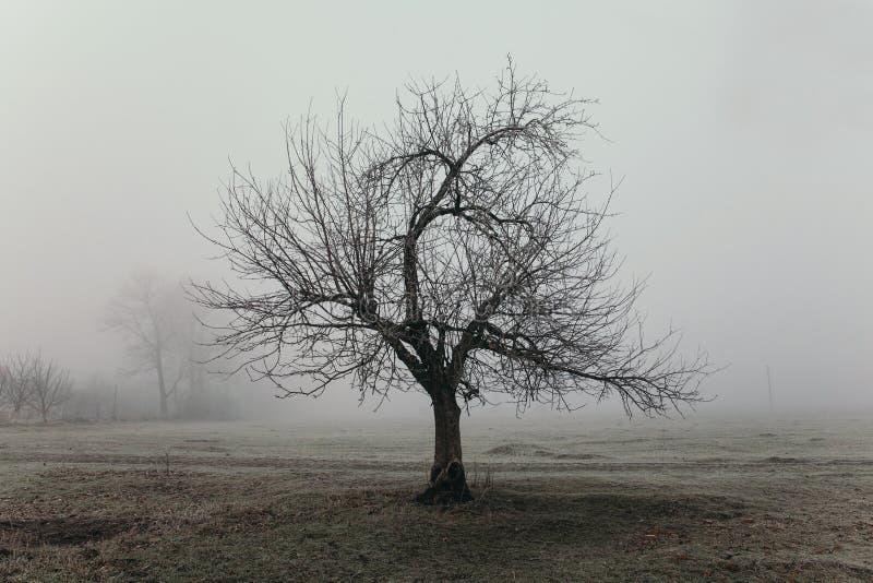 与奇怪的形状树的有雾的领域风景 悲伤和寂寞概念 早期的冬天早晨,在地面上的霜 库存照片