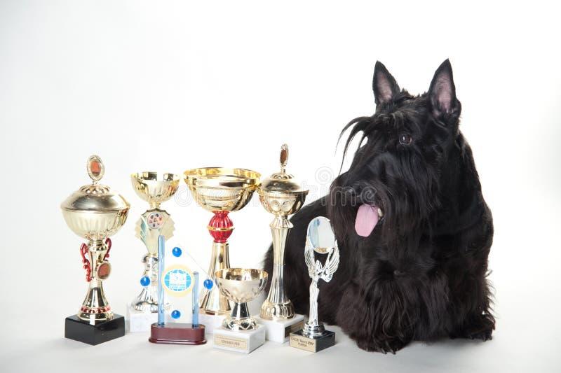与奖牌和杯子的刻痕狗 免版税库存图片
