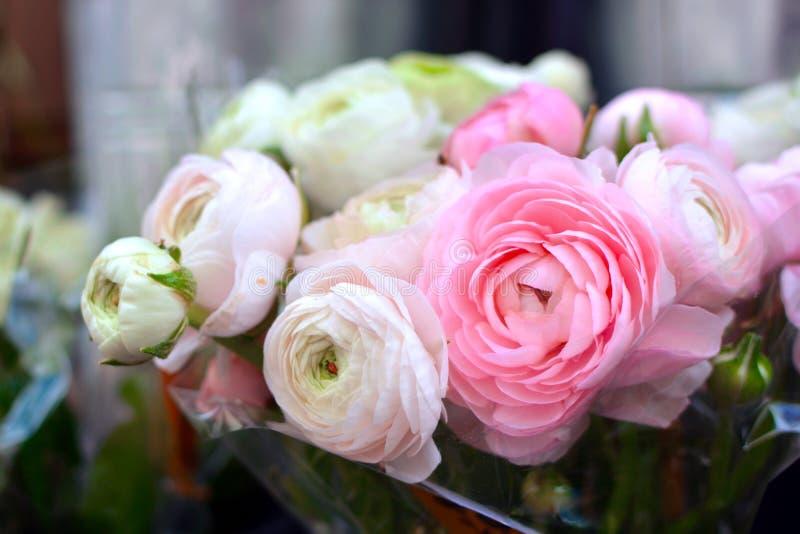 与奶油色白色和浅粉红色的毛茛毛茛属花的花花束在盛开 免版税图库摄影