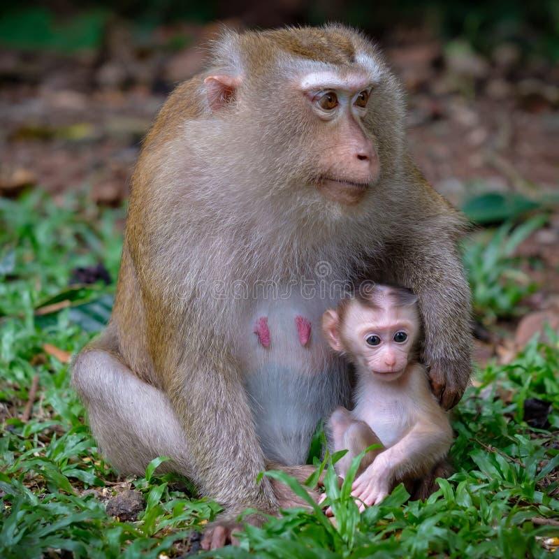 与她的小逗人喜爱的婴孩的猴子 库存图片