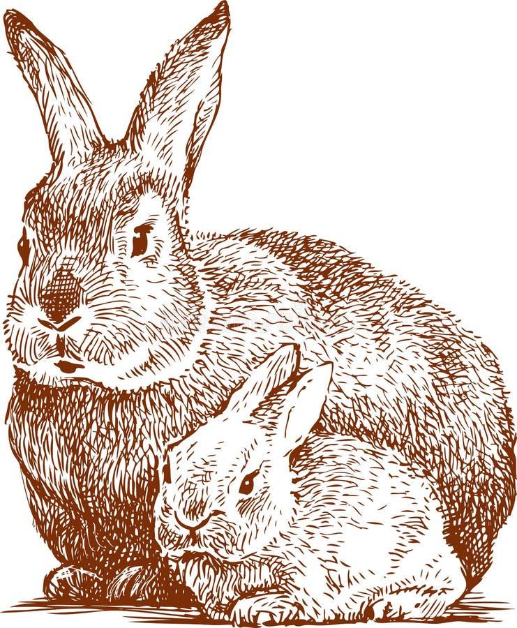 与她的崽的兔子 库存例证