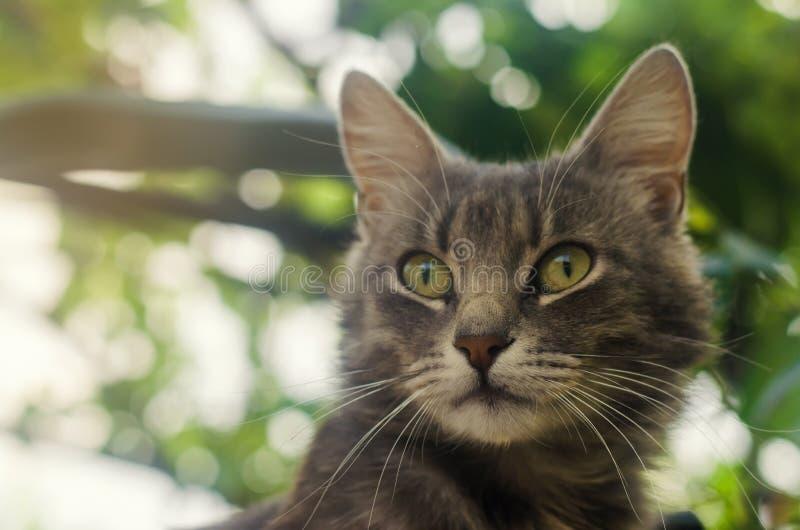 与好奇和惊奇的神色的灰色家猫在绿色bokeh背景  求知欲和不确定性,兴奋 免版税库存图片