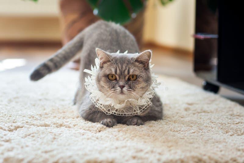 与婚礼袜带的小猫在他的脖子 库存图片