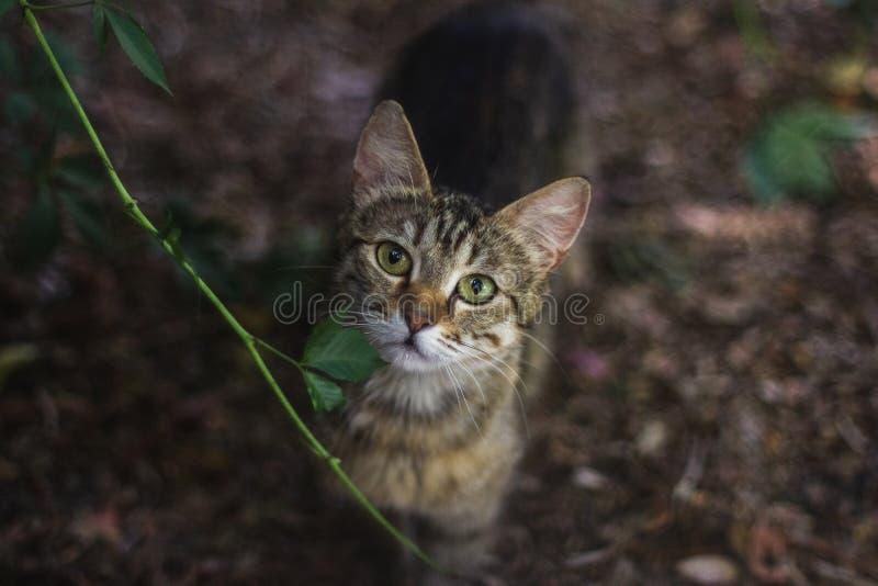 与嫉妒的野猫 库存图片