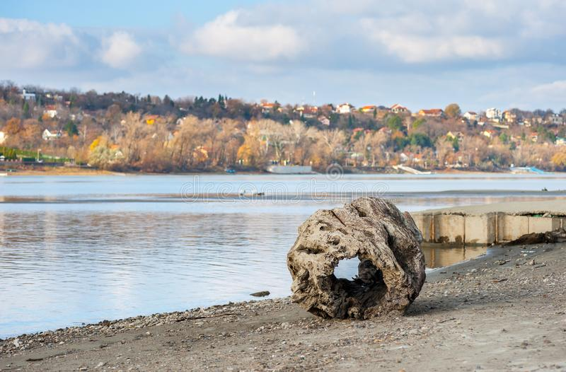 与孔的大老腐烂的树桩作为在沙滩海岸线的漂流木头在浪潮带来的水附近 库存图片