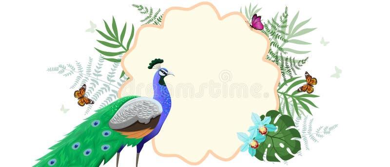 与孔雀、热带植物和蝴蝶的框架 o 向量例证
