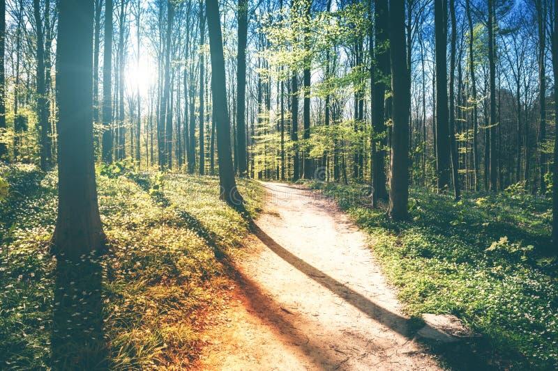 与季节性花之前盖的森林道路的春天风景 免版税库存照片