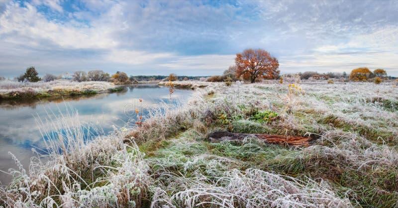 与孤独的橙色橡木的经典秋天风景、镇静河和冷淡的草和霜 在地面上的弗罗斯特,第一个前冬天Freez 库存图片