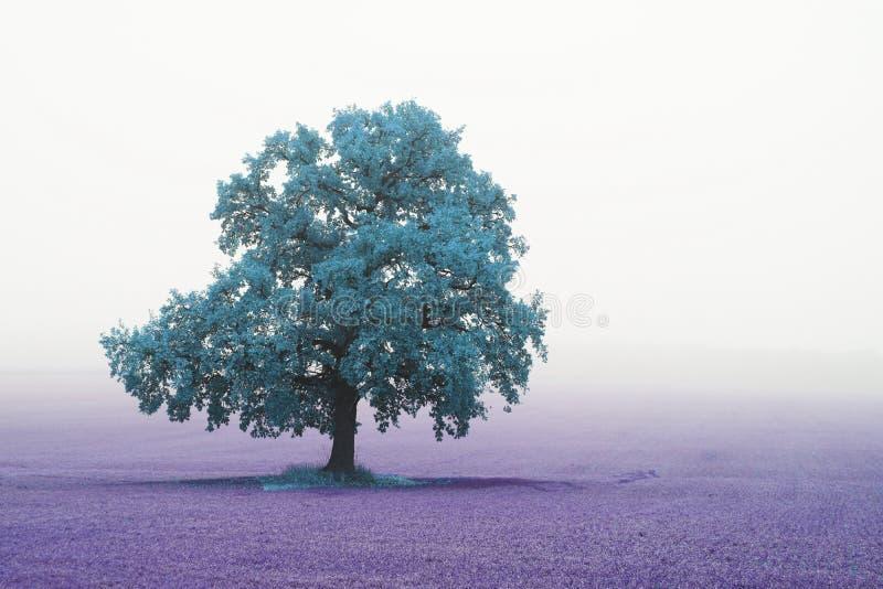 与孤立异常的树的美好的抽象风景在雾的领域中 库存图片