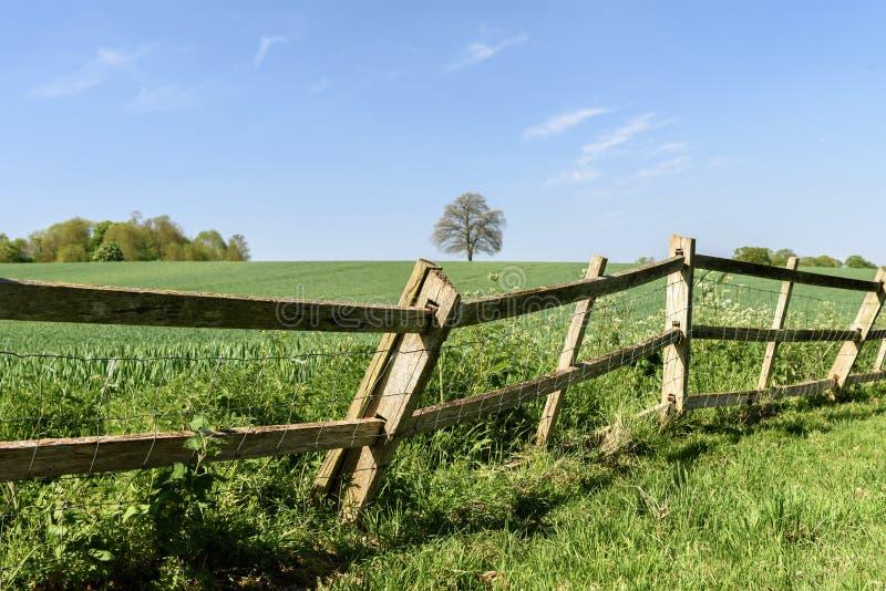 与孤立树的绿色麦田 免版税库存图片