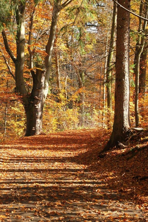 与它五颜六色的树的秋天自然 库存照片