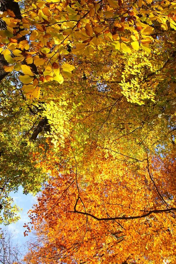 与它五颜六色的树的秋天自然 库存图片