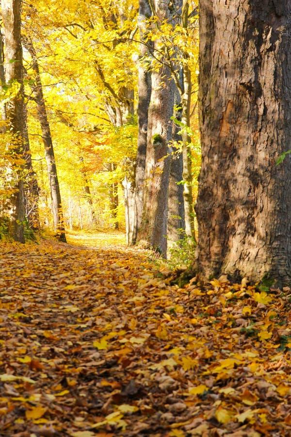 与它五颜六色的树的秋天自然 免版税库存照片