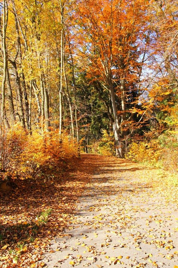 与它五颜六色的树的秋天自然 免版税图库摄影