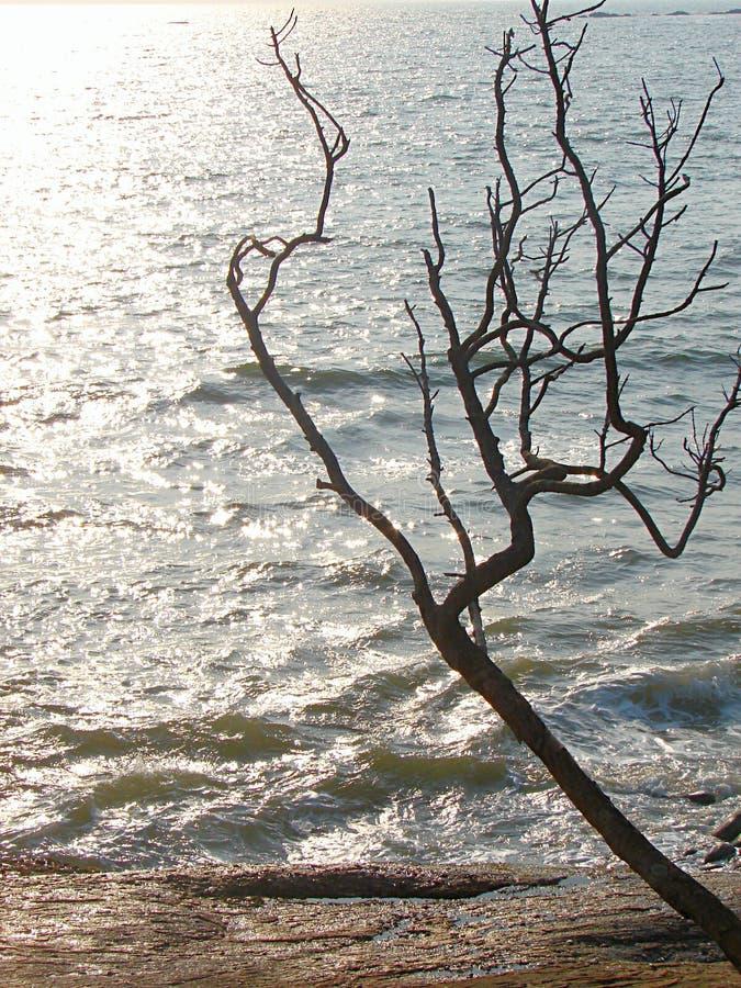 与它的分支的一棵有吸引力的不生叶的树反对与蓝色海洋水的抽象剪影的Brighr阳光 免版税库存图片