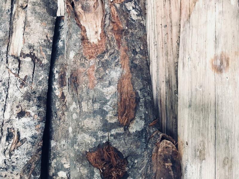 与它的吠声的木柴表面 库存图片