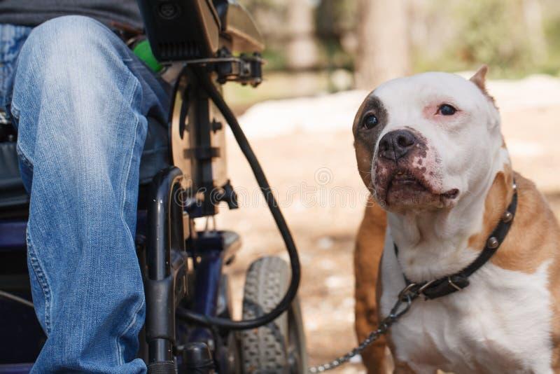 与他的所有者的忠实的狗。 免版税库存照片