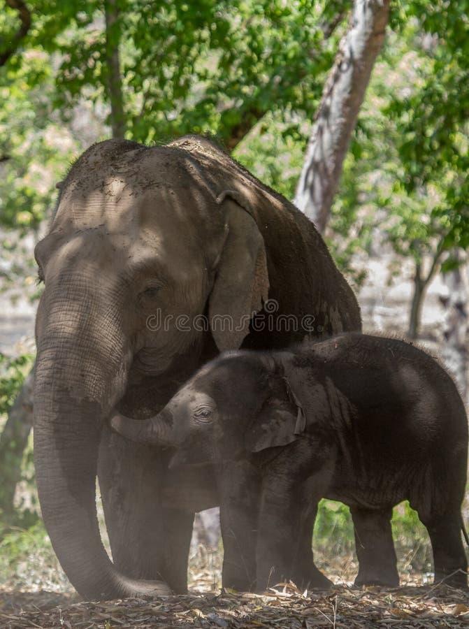 与它的母亲的幼小大象小牛 图库摄影