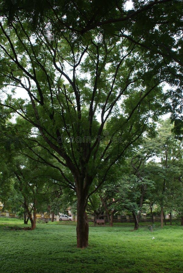 与它的秀丽的树 库存图片