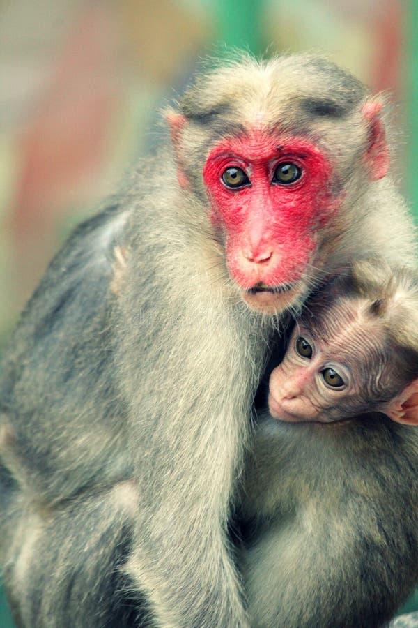 与它的youngone的猴子 图库摄影