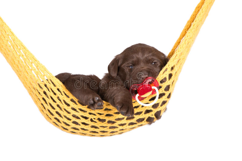 与安慰者的可爱的小狗 免版税库存照片