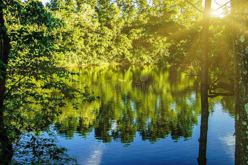 与安静的水湖池塘表面的一个平安的森林场面与周围的树反射 图库摄影