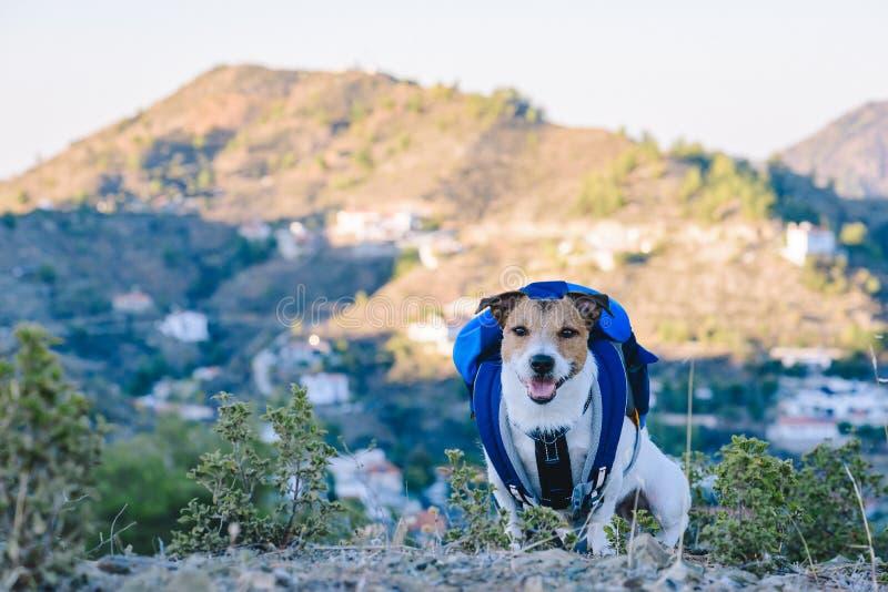 与宠物概念的旅行与与坐在与其他山的山顶部的背包的狗在背景 免版税图库摄影