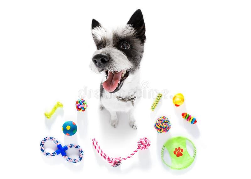 与宠物玩具的狗 库存照片