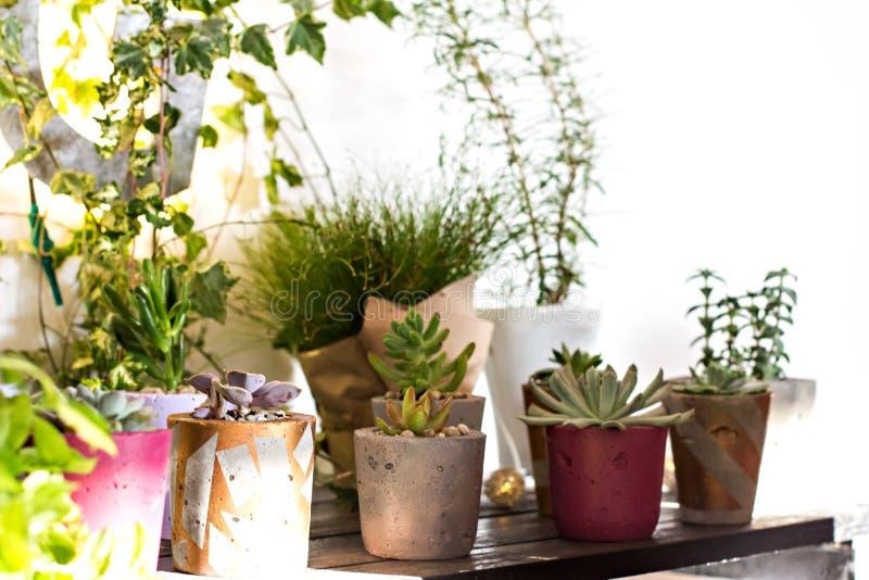 与室内植物的架子 种植盆 免版税库存图片