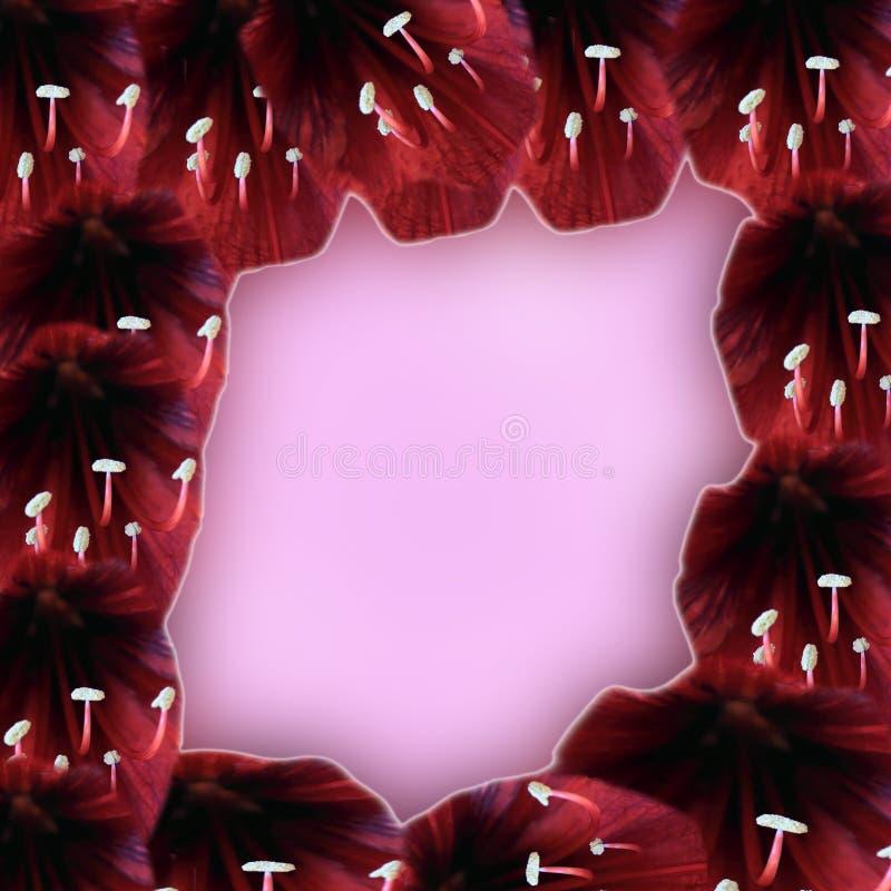 与室的开花的框架文本的 免版税图库摄影