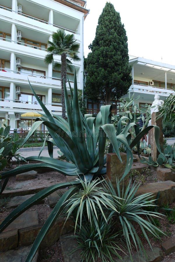 与宽长的水多的绿色的一朵绿色花在花床留下生长在一家美丽的旅馆旁边 库存图片
