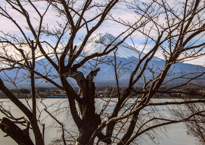 与富士山、森林和湖的冬天风景 日本的本质 免版税库存图片