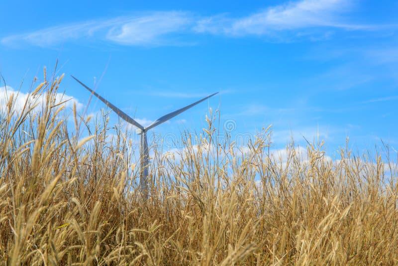 与对流放电涡轮的草花在背景和天空蔚蓝和云彩 免版税库存照片