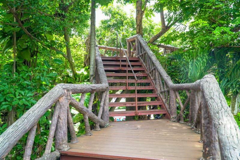 与导致走道的木头的金属楼梯通过有树的密林 图库摄影