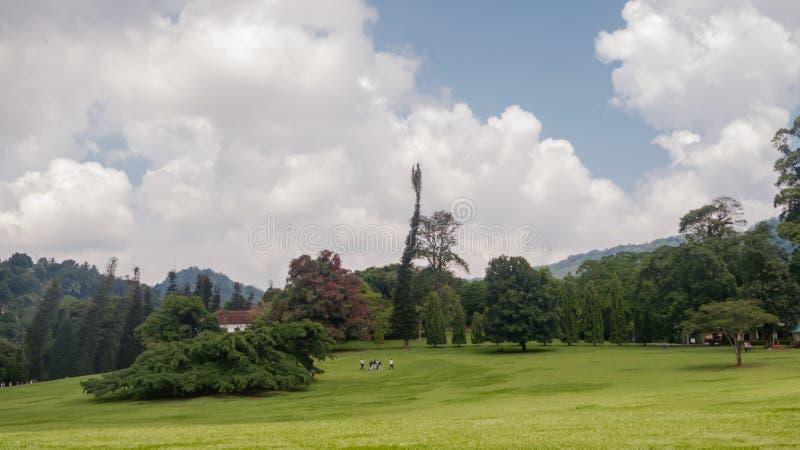 与小山和领域的绿色风景在亚洲 Peradeniya 皇家植物园,斯里兰卡 免版税库存图片