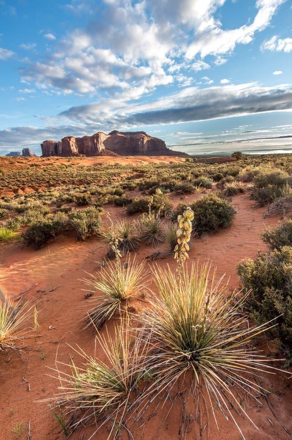 与小山的沙漠在前景的风景和mesas和仙人掌 图库摄影