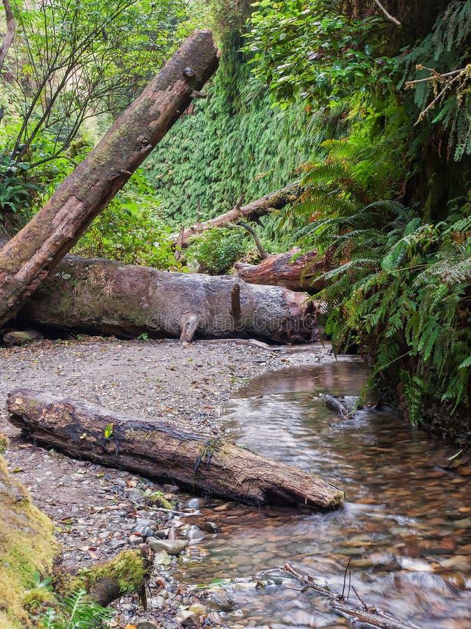 与小河的蕨峡谷 免版税库存照片